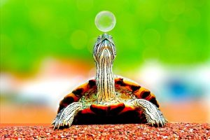 turtle with bubble
