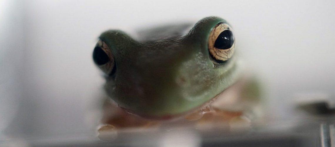cute pet frog